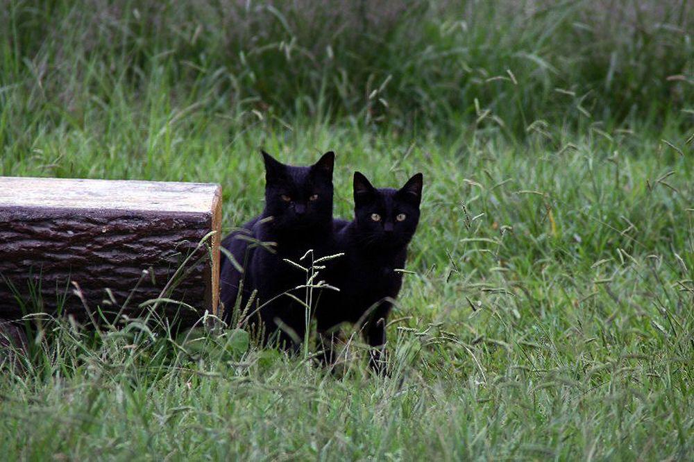 2008.09.28 捨て猫